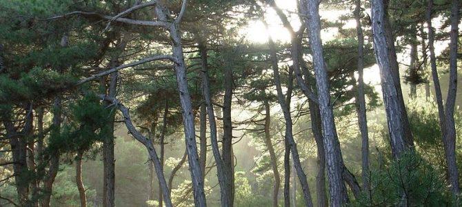 Απροστάτευτα τα ελληνικά δάση με ευθύνη της Κυβέρνησης. Παραμένουν ανεκμετάλλευτα τα κοινοτικά κονδύλια – Κατάθεση Ερώτησης