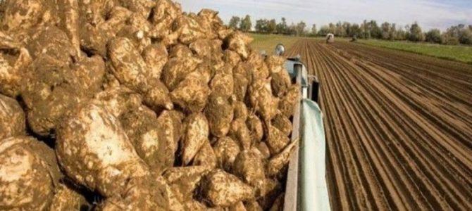 Ασυγκόμιστα τεύτλα ακόμη στον Έβρο με ευθύνη της Κυβέρνησης! Σε απόγνωση οι καλλιεργητές. Ετοιμάζουν αγωγές!  – Κατάθεση Ερώτησης