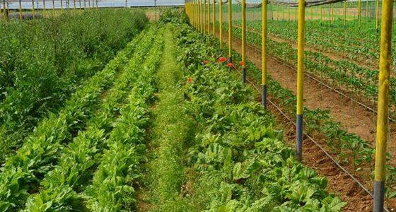 «Βατερλώ» με το Μέτρο 11 για τις Βιολογικές Καλλιέργειες! Στην Αν. Μακεδονία και Θράκη εγκρίθηκαν μόνο 119 αιτήσεις!! – Κατάθεση Επίκαιρης Ερώτησης