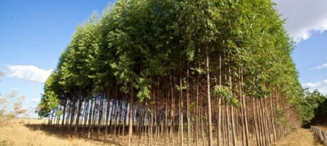 Εξοντωτικές κυρώσεις του ΥπΑΑΤ, «γονατίζουν» οικονομικά τους αγρότες για το πρόγραμμα δασώσεων – Κατάθεση Ερώτησης