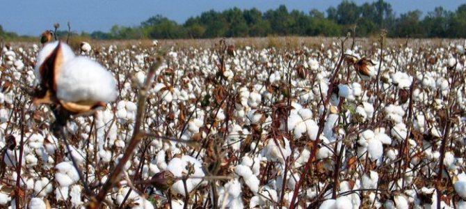 Θέμα επιβίωσης για τους παραγωγούς του Έβρου η καταβολή της Συνδεδεμένης και της DE MINIMIS αποζημίωσης – Επιστολή στον Υπουργό Αγρ. Ανάπτυξης